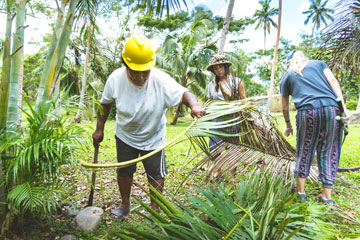 Fijians clearing palm tree leaves