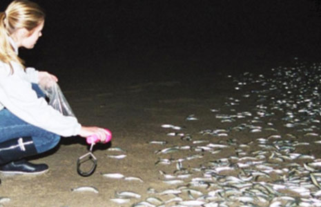 Pepperdine student with grunion on beach