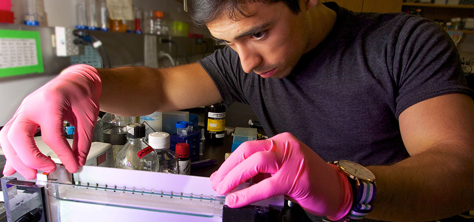Cell biology of stress: Pepperdine student in lab